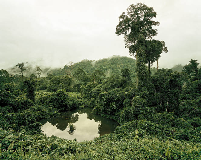 primary-forest-02-lake-malaysia-102012-by-olaf-otto-becker-BHC3675